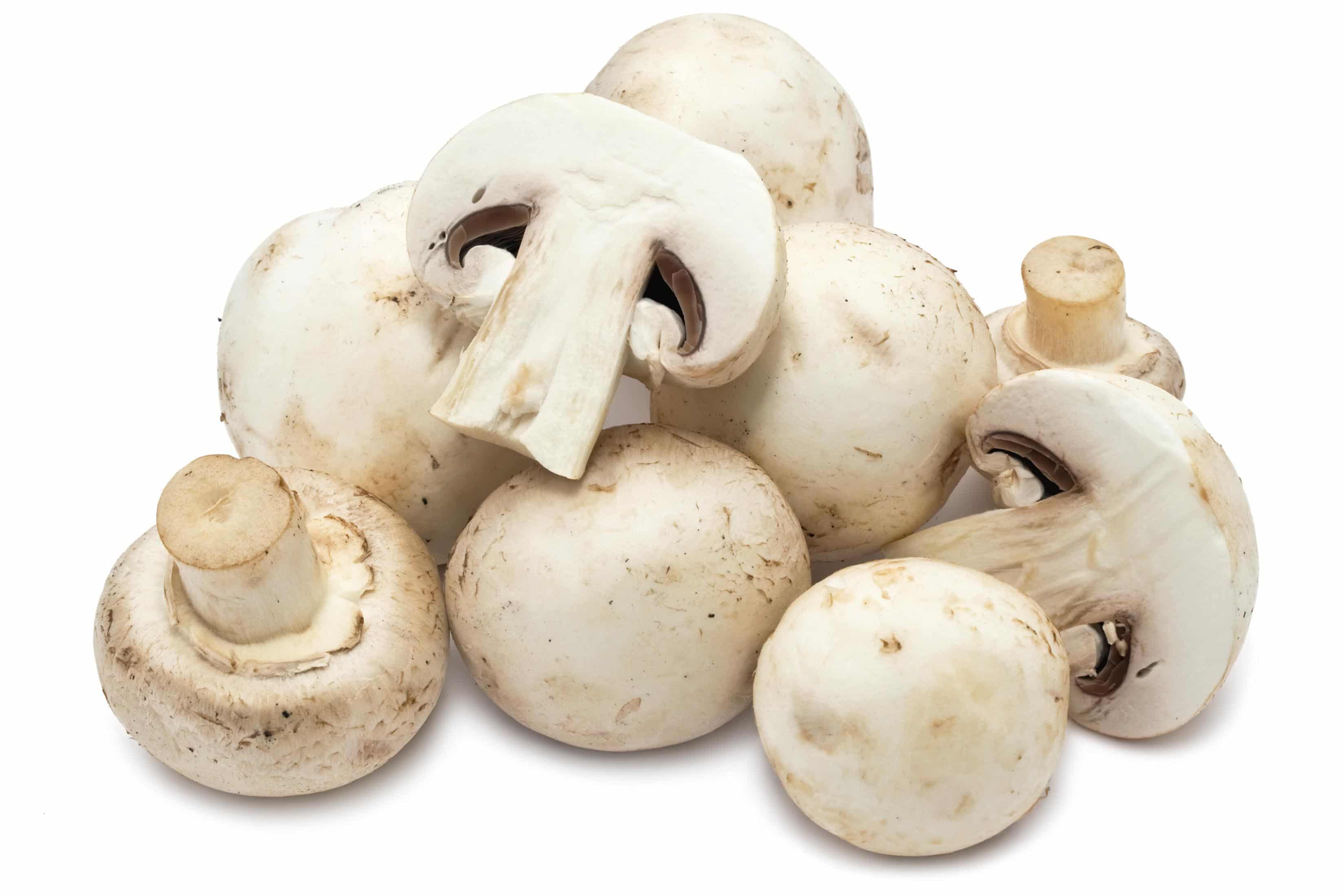 Agaricus Bispora Button Mushroom 1 Veg And More Fruit
